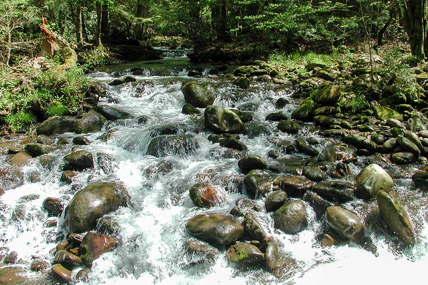 Mountain stream in the National Park
