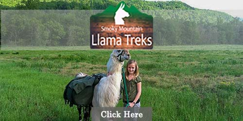 Llama Treks in the Smoky Mountains