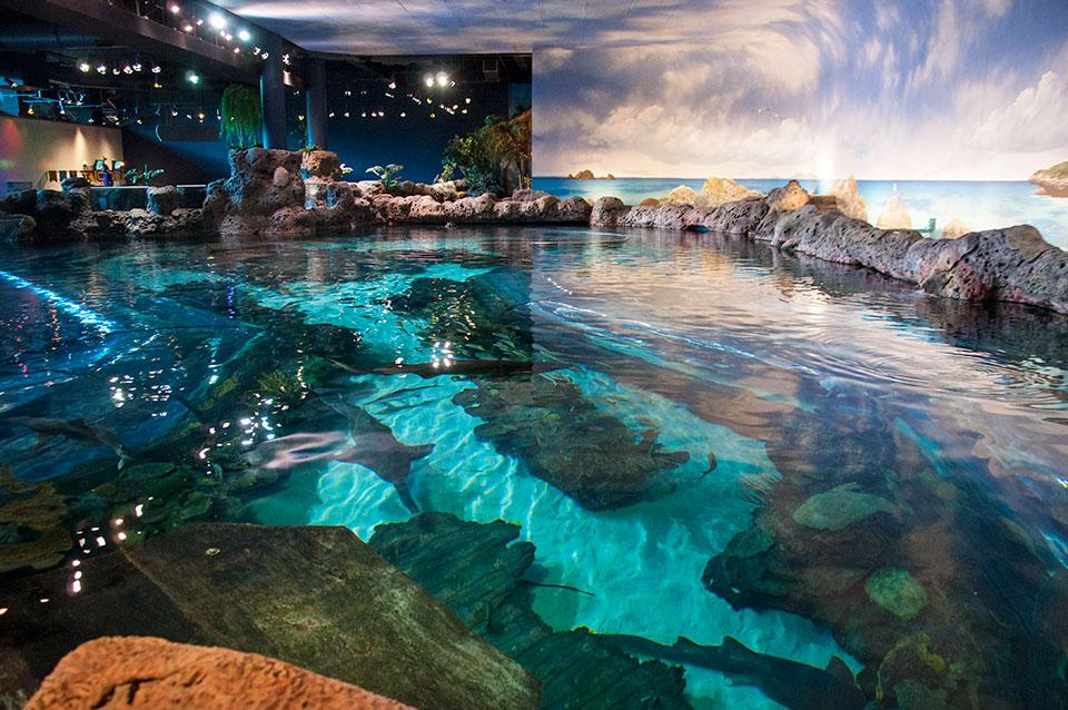 Smoky Mountain Resorts Aquarium in Ripley Package