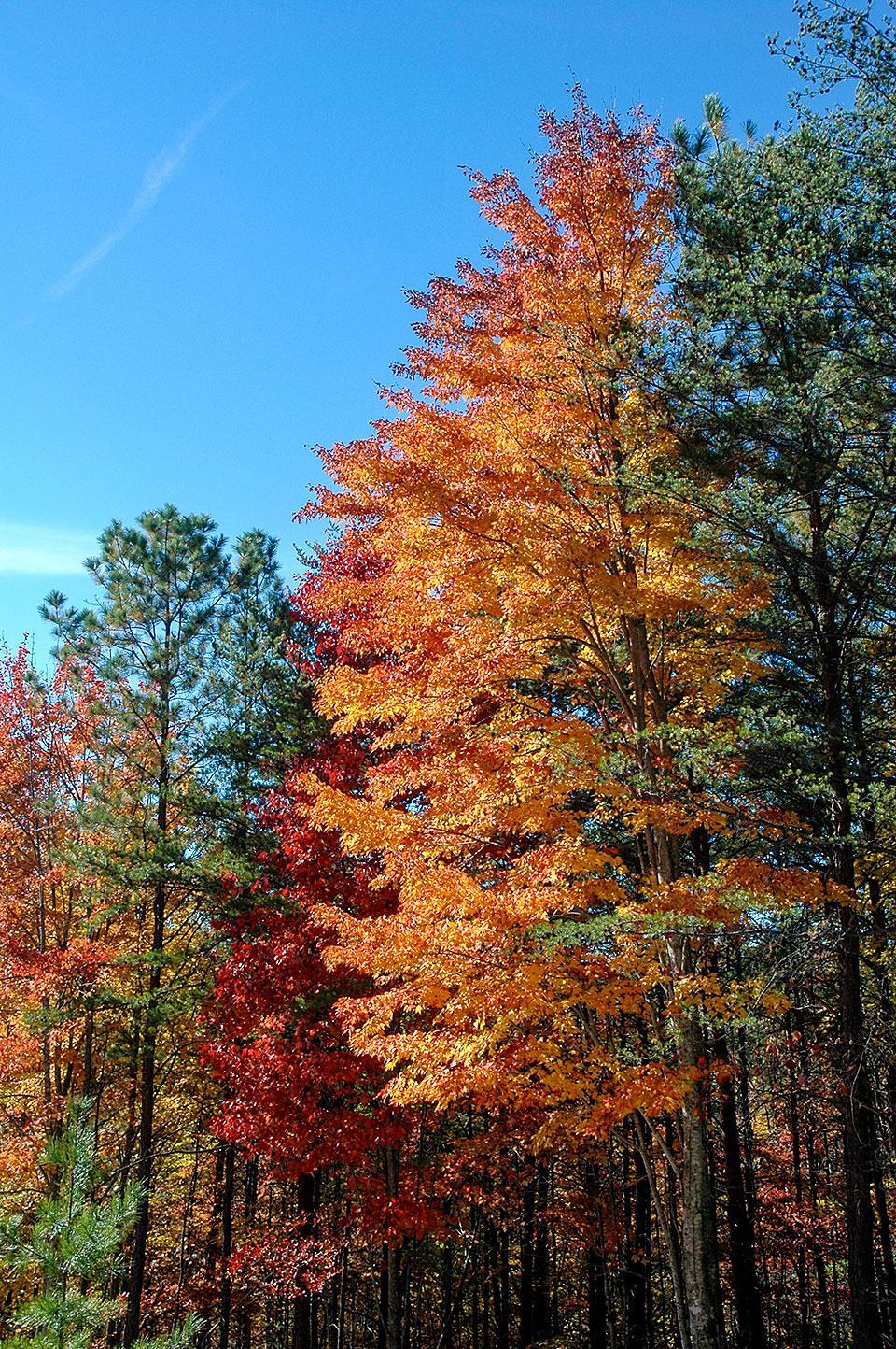 Fall Color Smoky Mountains