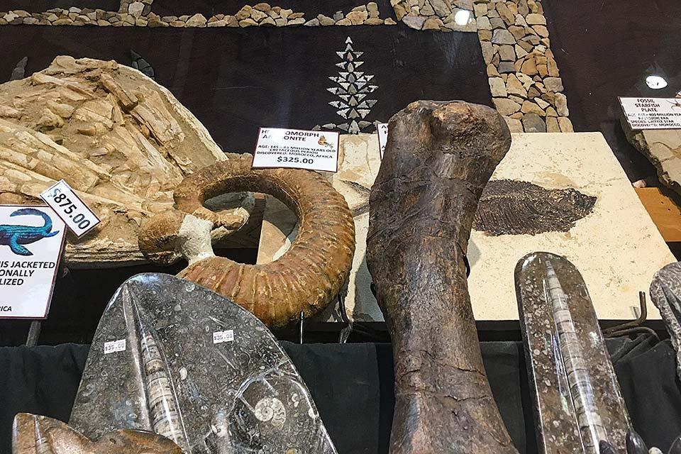 Dinosaur bones and other artifacts for sale at the Relic Room.