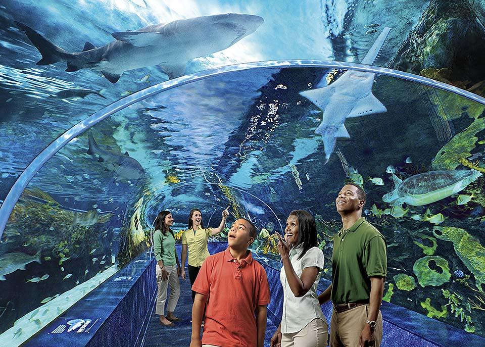 The aquarium in Gatlinburg is a great place for families.