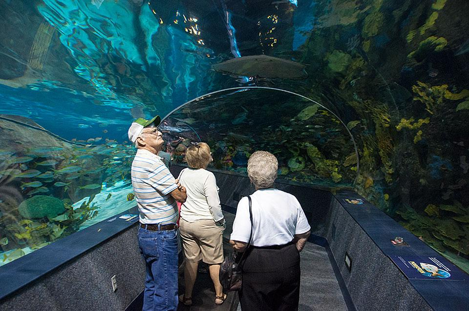Best Smoky Mountain Indoor Activities For Rainy Or Snowy Days