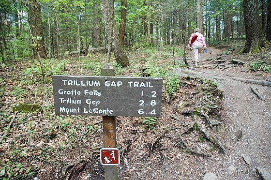 Smoky Mountains Easy Hiking Trails